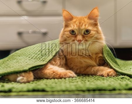 Cute Ginger Cat Lying On Bathroom Floor, Covered With Green Rug. Fluffy Funny Pet Basked In Warm Roo