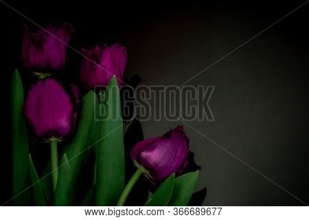 Four Red Tulips On A Black Background. In The Photo, The Flowers Are Arranged Vertically And There I