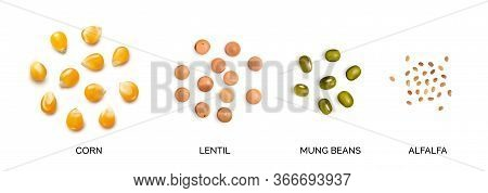 Realistic 3d Illustration Of Legumes Collection Isolated