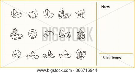 Nuts Icons. Set Of Line Icons On White Background. Cocoa Bean, Brazil Nuts, Soy Nuts. Dieting Concep