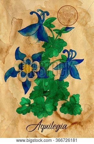 Aquilegia Flower With Magic Seal On Old Paper Texture Background. Witch Healing Herbs Collection For