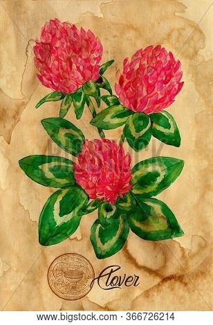Clover Flower With Magic Seal On Old Paper Texture Background. Witch Healing Herbs Collection For Ha