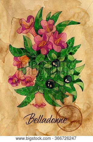 Belladonne Flower With Magic Seal On Old Paper Texture Background. Witch Healing Herbs Collection Fo