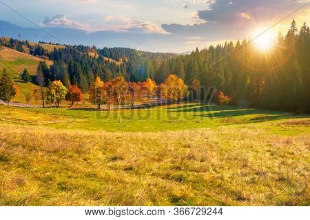 Forest In Red Foliage At Autumn Sunset. Trees With Branches With Red Foliage In Forest. Hillside In