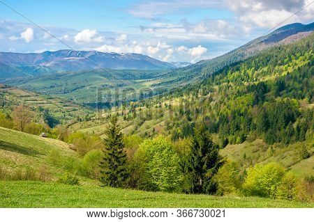 Green Fields Rural Landscape. Beautiful Countryside Nature In Spring. Scenic View Of Meadow In Grass