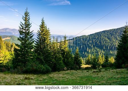 Spruce Trees On The Meadow In Mountains. Beautiful Sunny Scenery With Distant Valley And Hills In Mo