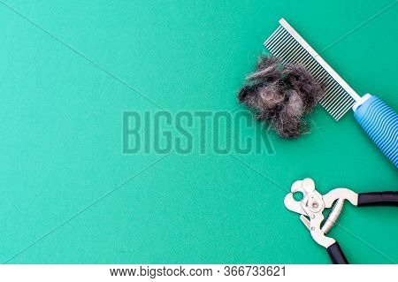 Grooming Tools Comb, Scissors For Nails And A Piece Of Pet Hair, Flat Lay. Space For Text. Grooming