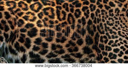 Leopard Pattern Design. Real Fur Skin Texture. Animal Print Pattern Tile Background