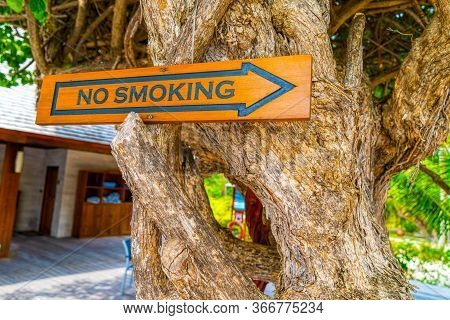 The Inscription Do Not Smoke.the Winding Trunks And Roots Of An Old Tree Create A Bizarre Shape. Bea