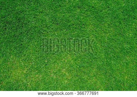Green Grass Texture Background, Top View Of Grass Garden Ideal Concept Used For Making Green Floorin