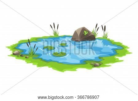 Picturesque Water Pond With Reeds And Stones Around. The Concept Of An Open Small Swamp Lake In A Na