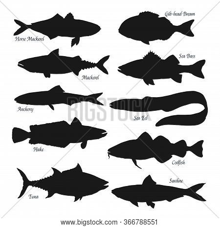 Fish Black Silhouettes. Sea Animals Horse Mackerel, Gilt-head Bream Or Sea Bass And Anchovy, Ocean E