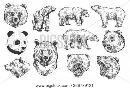 Grizzly Bear And Panda Vector Sketches, Isolated Icons Set. Heads Of Predatory Animals. Wild Polar A