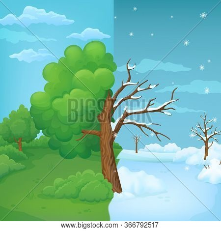 Tree Split In Half On A Divided Summer And Winter Background. Part With Lush Green Leaves With Green