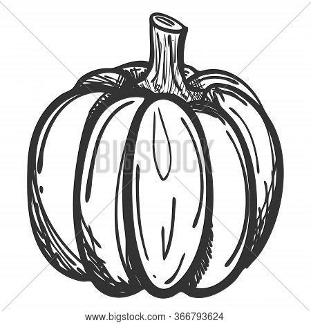 Sketch Of A Whole Pumpkin In Doodle Style. Drawing Of A Ripe Pumpkin With Hatching. Hand Drawn And I