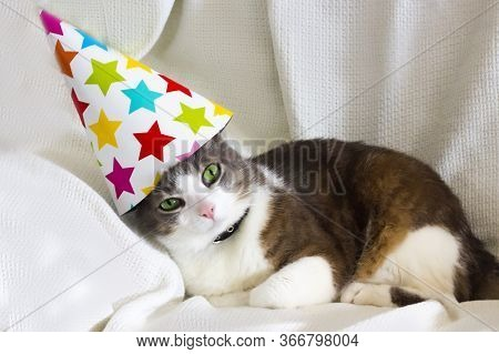 Cute Pet Tabby Cat With Birthday Party Hat Sitting On White Sofa. Domestic Cats Birthday Concept. Pe