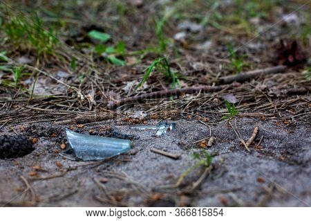 Environmental Ecology Concept, Trash In The Forest, A Splinter Of A Bottleneck From A Glass Bottle L