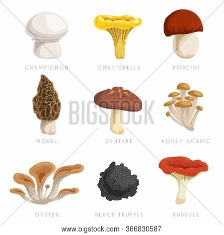 Edible Mushrooms Set. Cartoon Flat Design Collection. Champignon, Chanterelle, Porcini, Morel, Shiit
