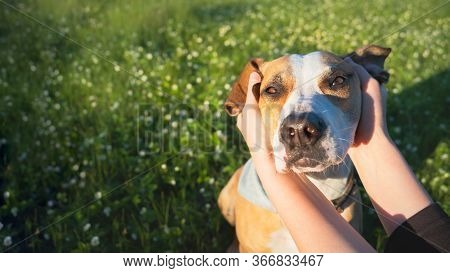 Relaxed Dog Face In Human Hands Among Green Meadow And Flowers. Pet And Owner Companionship, Trust A