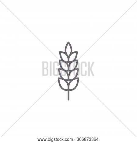 Wheat Spike Vector Icon Isolated On White, Grain Ear Icon Element For Organic Food Design.