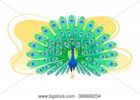 Peacock Flat Colorful Vector Illustration. Pretty Color Green Tail Banner. Peafowl Greeting Card, Po