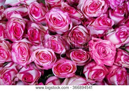 Bright Background Of Natural Red Roses. Delivery Flowers.