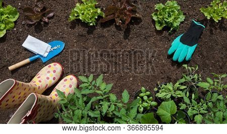 Garden vagetable patch with growing  lettuce and pots of tomatoes, cucumber, herbs, gardening,  food growing, healthy lifestyle, self sufficient concept