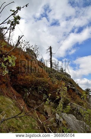 Lonely Trees On The Top Of The Mountain Ještěd On The Background Of Wild Clouds, Mountain Scenery