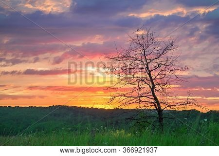 Sunset Through A Leafless Trees In The Countryside. Selective Focus