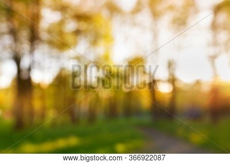 Summer Abstract Nature Blurred Outdoor Background. High Trees In Parkland In Bokeh Sparkles With Bea