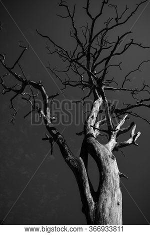 Black & White Tree Pic Captured In Rishikesh