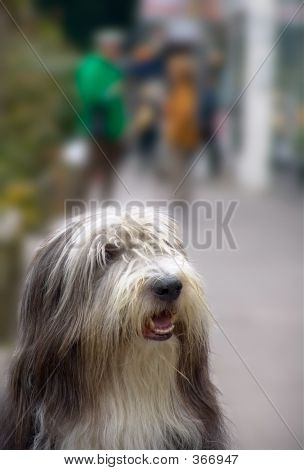 dog in street waiting for owner poster