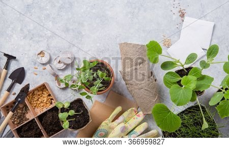 Peat Container With Soil, Planting A Plant With Gardening Tools. Garden, Plant Concept. Working In T
