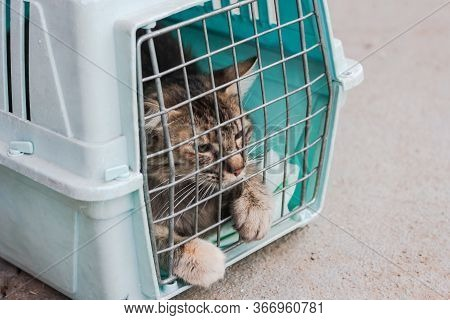 Sad Cat Behind Bars, Closed In Trasport Box Or Pet Carrier. Homeless Pets And Veterinary Concept