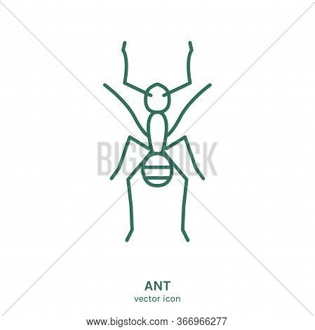 Ant Sign. Eusocial Insect Pictogram. Outline Icon. Graphic Design For Print, Web, Mobile And Infogra