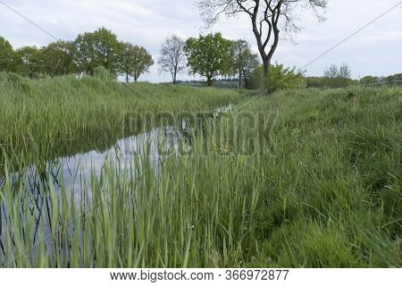 Tranquil Landscape At A Ditch, Grasses And Leaves On The Edge Of The Ditch, The Blue Sky Reflected I