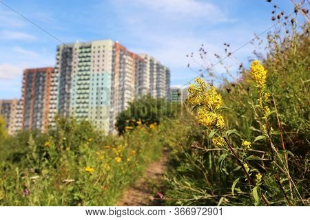 View To The Residential Buildings From The Hill, Overgrown With Grass And Wild Flowers Of Goldenrod.