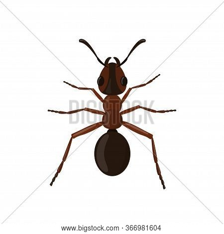 Ant Isolated On White Background. Insect Illustration