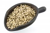 Scoop Of Shelled Sunflower Seeds