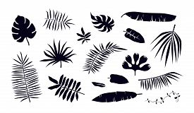 Stock Vector Set Of Tropical Plant Leaf Silhouettes. Black Print On White Backdrop