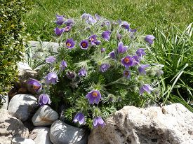 Bunch Of Blue Flowers On The Flower Bed