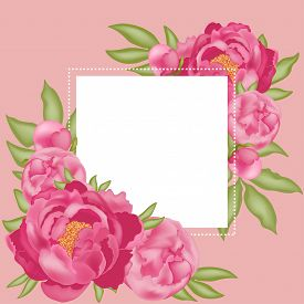Background With Place For Text, With Pink Peonies, Buds And Green Leaves, On A Pink Background, Stoc