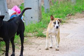 The Two-eyed Stray Brown Dog Is Caused By Cross-breeding