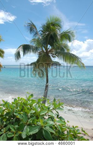 Paradise Vi