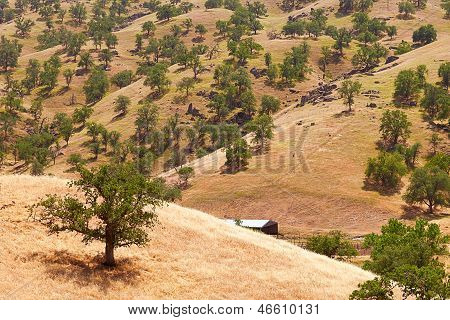California Farm Landscape