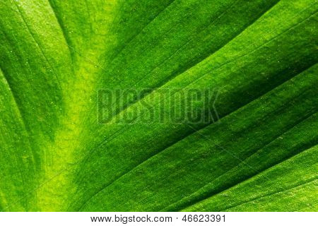 Abstract Of Green Leaf Surface