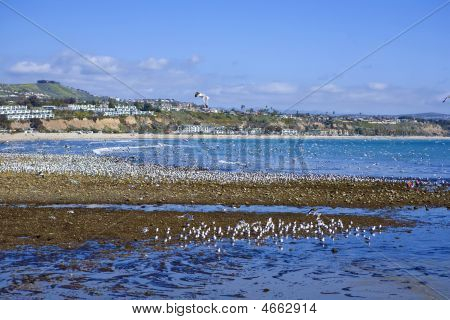 Doheny Extreme Low Tide