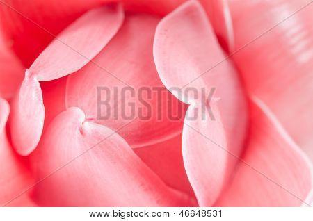 Gemeinsame Ginger Flower Ingwergewächse