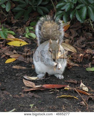 Eichhörnchen Essen