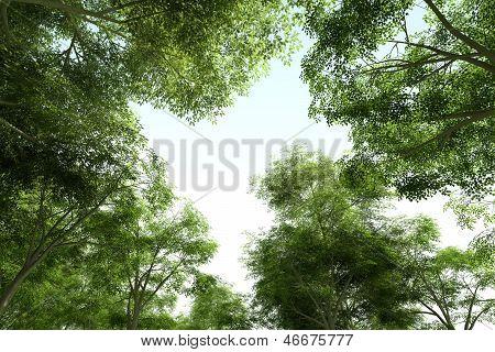 Treetops - Green Canopy